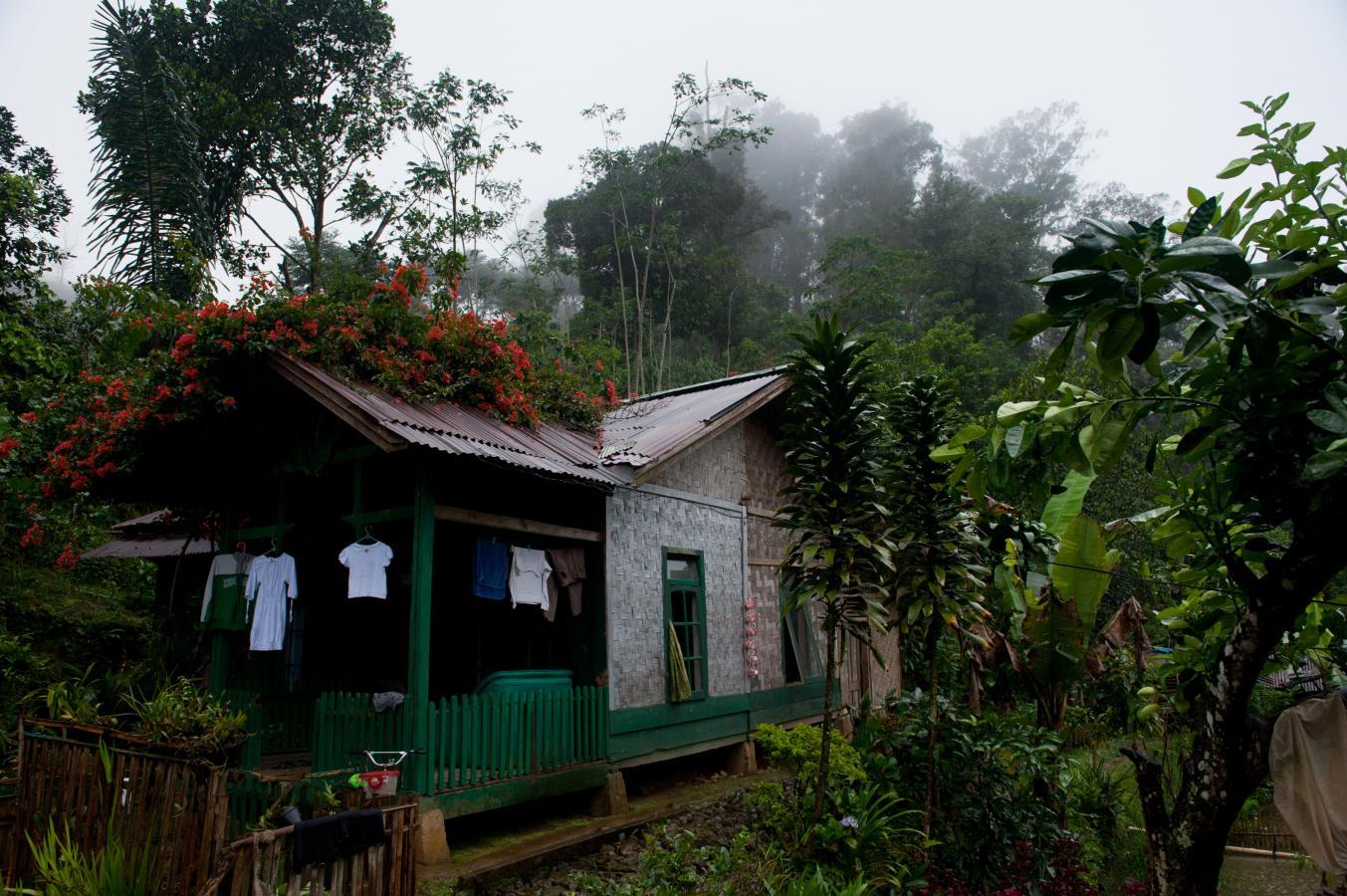 lost-in-the-jungle-1-java-indonesia-2010