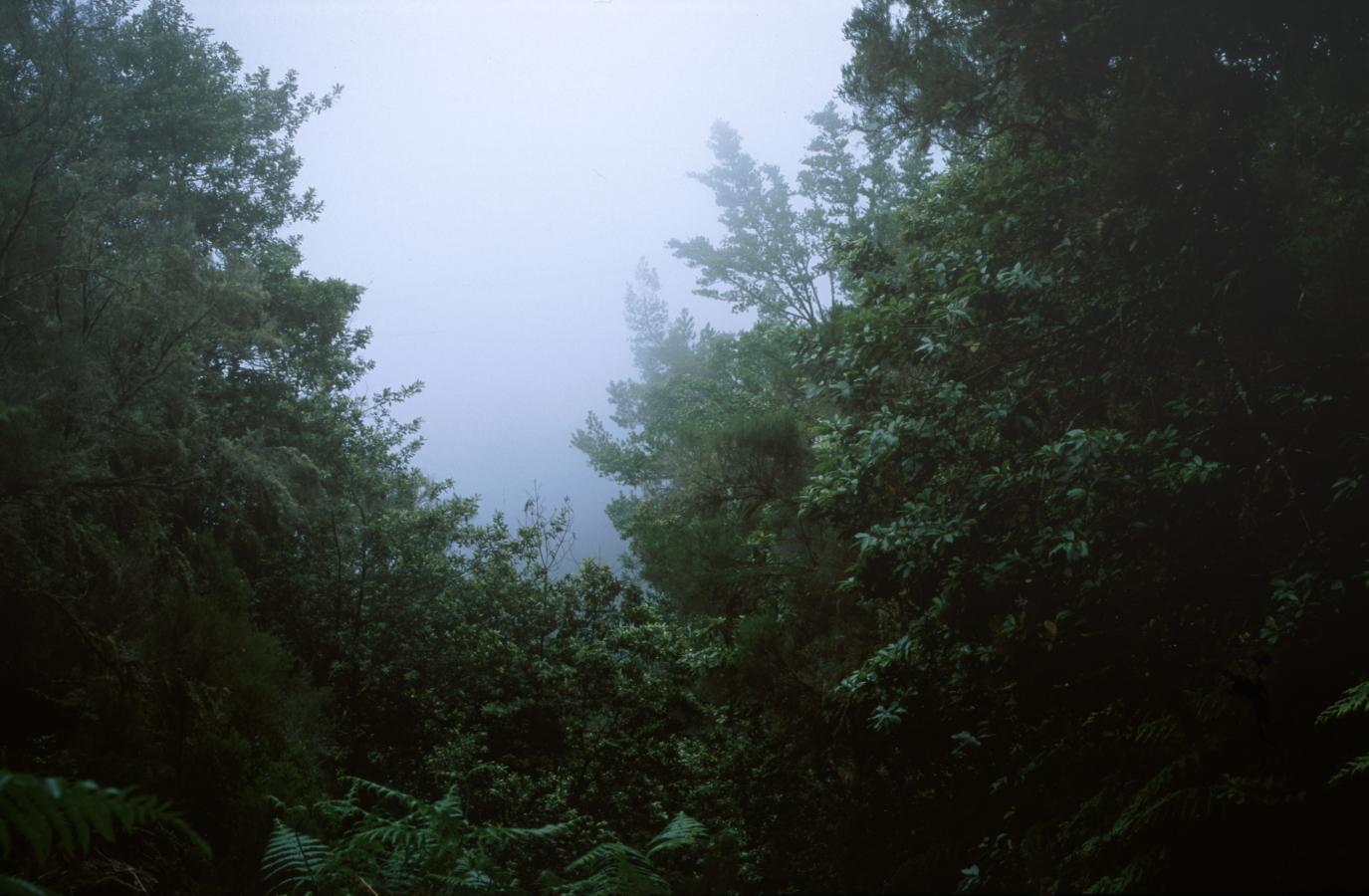 mist-10-madeira-2001