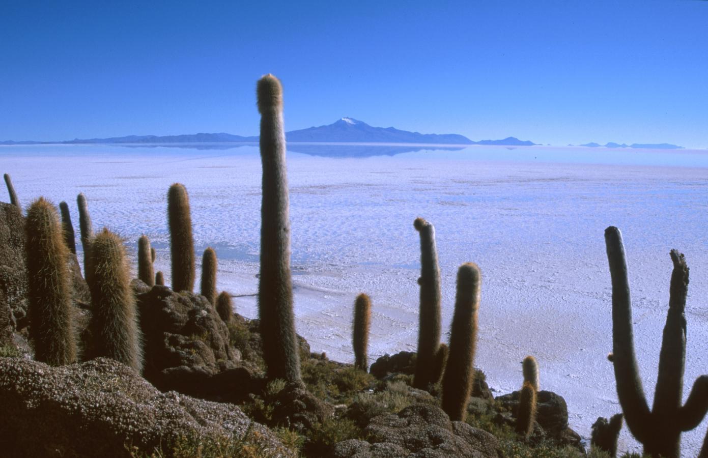 lama-glama-15-bolivia-2001