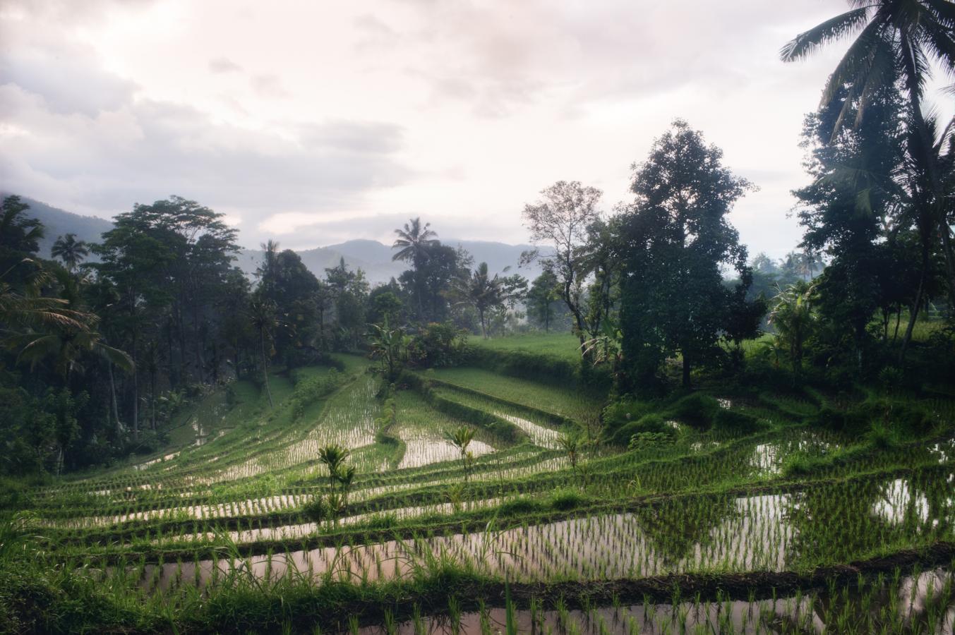 rice-paddy-field-during-sunrise-somewhere-around-sidemen-bali-2010