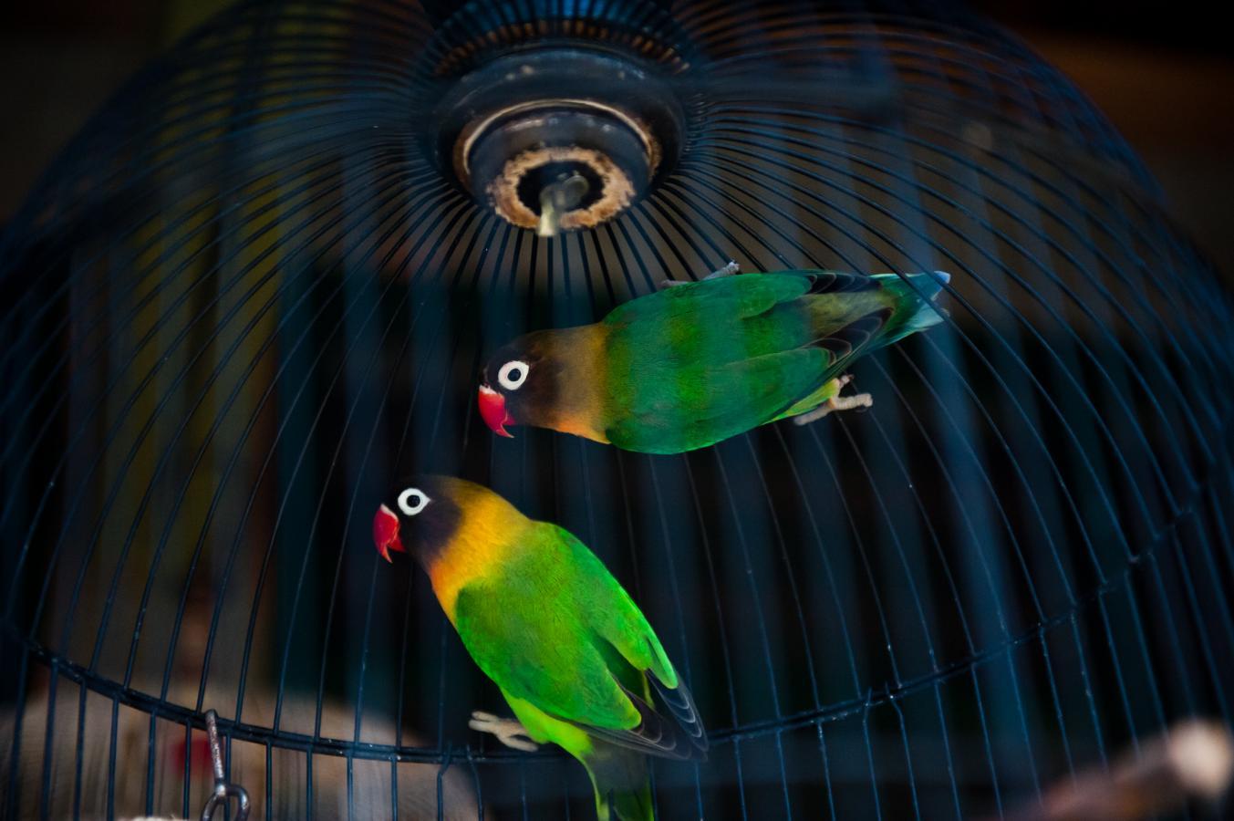 bird-market-in-yogyakarta-java-2010